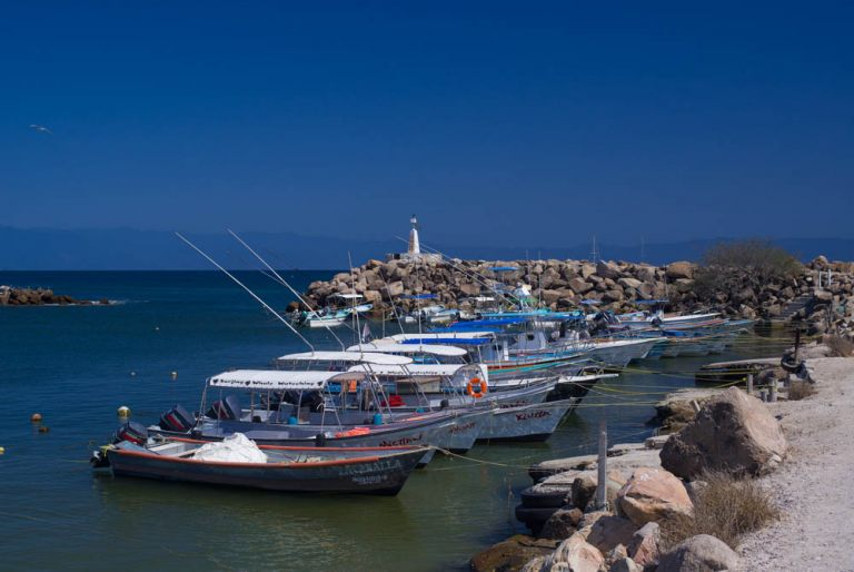 Tour Boats Docking